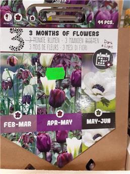 Bulbes mix 3 mois floraison Foncé + Clair (VT) ** A planter en automne **