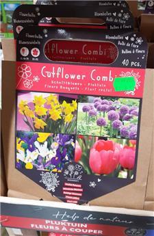 Bulbes utiles fleur à couper  (VT) ** A planter en automne **