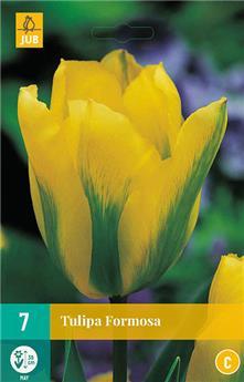 Tulipe Formosa * 7 pc cal.11/12