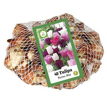 Tulipe Pastel Mix * 40 pc cal.11/12