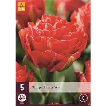 Tulipe Pamplona * 7 pc cal.11/12