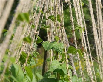 Corde en fibre de sisal - 200 m
