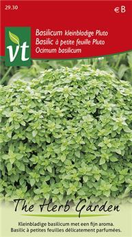 VT basilic pluto a petites feuilles