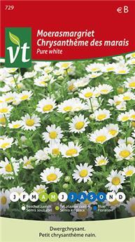 VT chrysantheme des marais