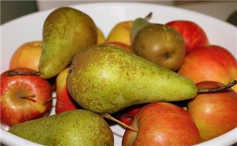 Plantation des fruitiers