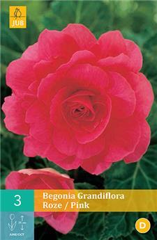 Begonias grandiflora rose 5/6 x 3