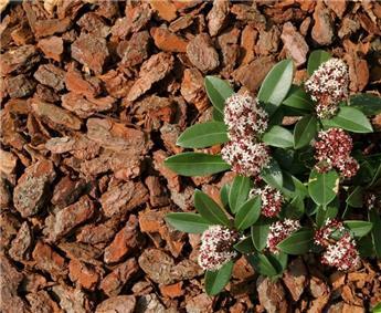 Ecorces pin decoratives fines15 25  60l