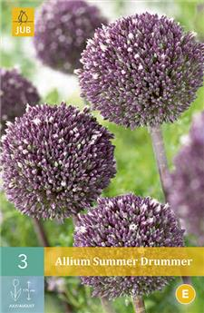 Allium Summer Drummer 12/+ X 3 pc (Copie)