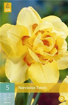 Narcisses Tahiti 5 PC / POT