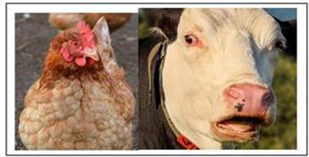 CJR Fumier sec Poule - Vache Bio 3.5 kg seau recyclable