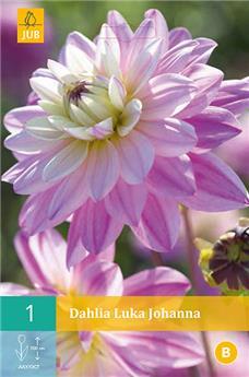 Dahlia Luka Johanna * 1 Pc