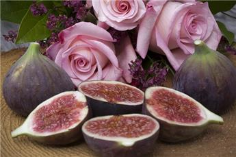 Ficus carica Violette d´Argenteuil Demi Tige Pot C12