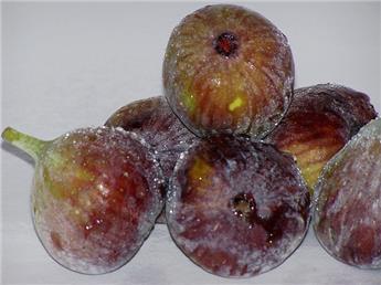 Ficus carica Ice Crystal Buisson Pot C5.5  **Bifère et Autofertile**