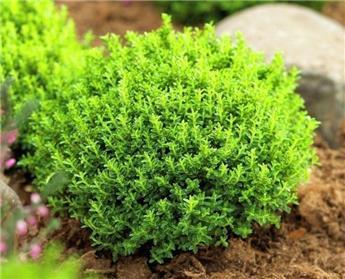 Hebe Green Globe Pot P13