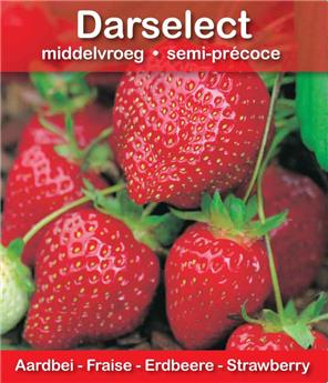Fraisier DARSELECT (N-REM)