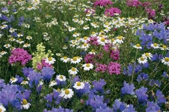 Melange fleurs Gothic N°4 - 100 G